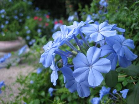 blue-flower-compressed